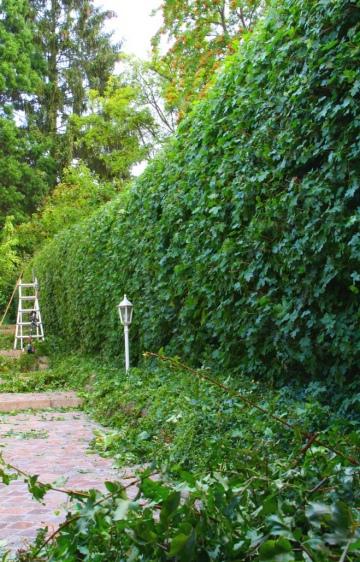 unsere leistungen im garten- und landschaftsbau - thomas-garten.de, Garten ideen